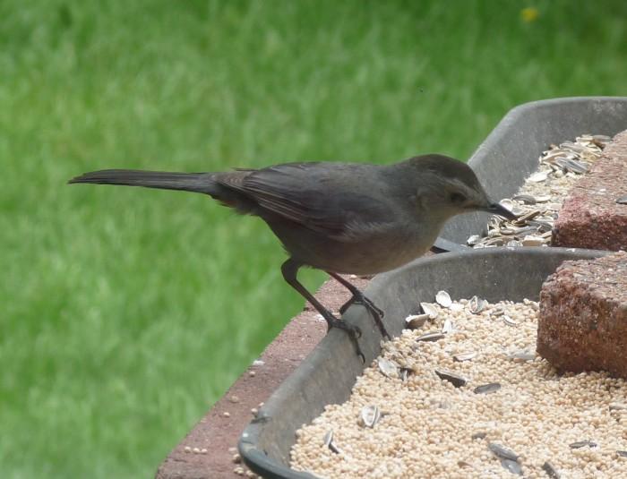 Glassblower Info - Backyard Birds - Holland, Bucks County