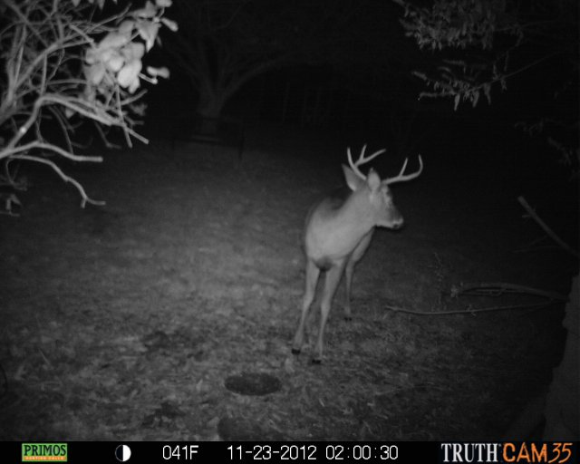 Truth Cam 35 photo of three deer